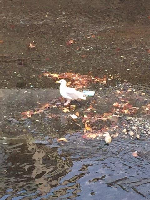 【240】川にやってくるお客さんから季節を感じる